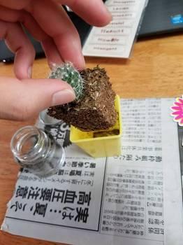 Image_69dda04.jpg